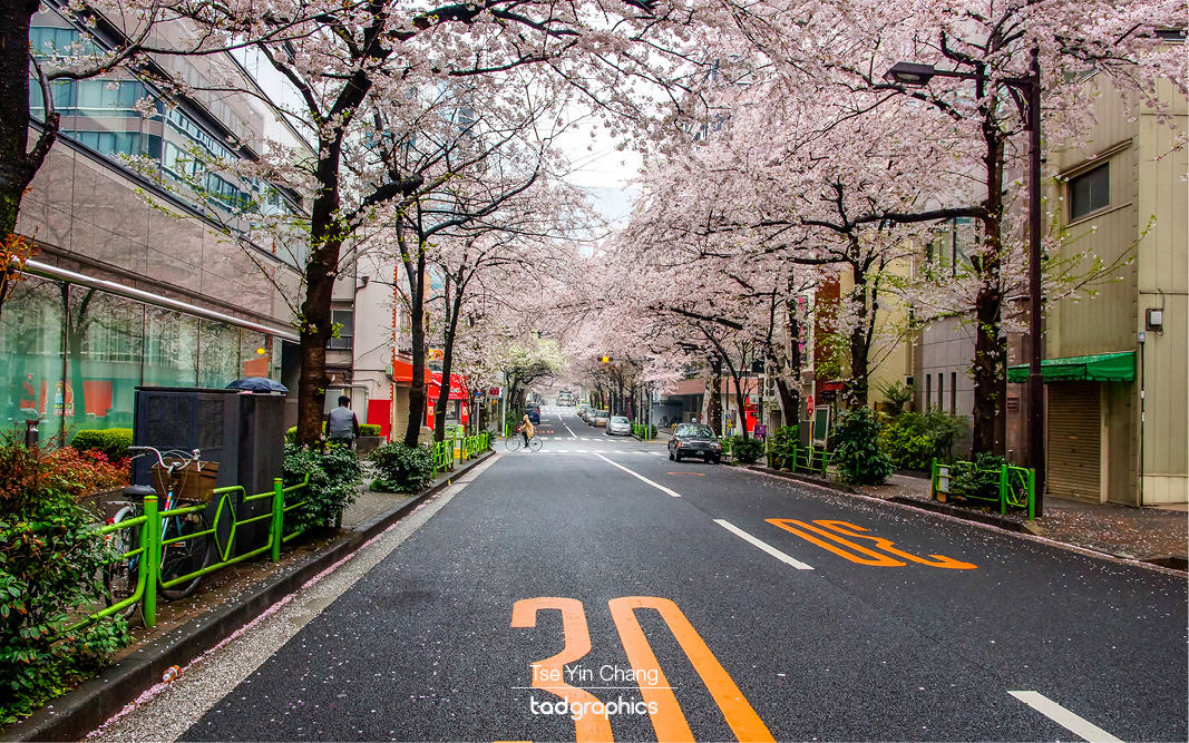 Adventures in Japan – chasing cherry blossom – Part 4: Tokyo