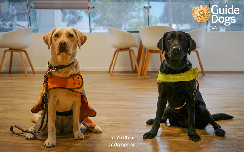 Guide Dogs WA - Annie and Sundae