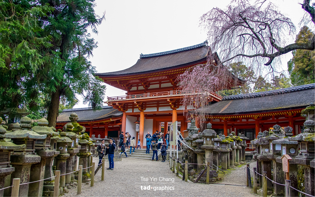 Kasuga-taisha, Nara city's most celebrated shrine, which dates back to 768 AD. It's probably most famous for the beautiful stone lanterns that line the entrance to the shrine