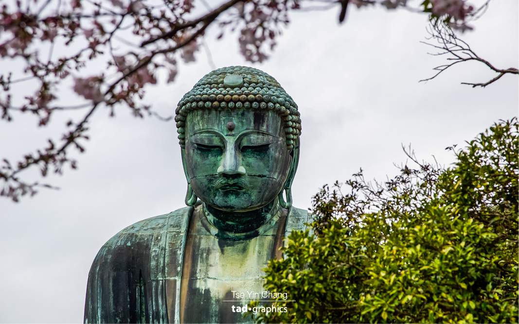 The giant bronze Buddha in Kotoku-in temple was built in the year 1252.